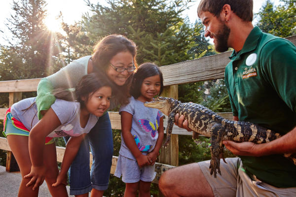 Family looking at alligator at Zoo America