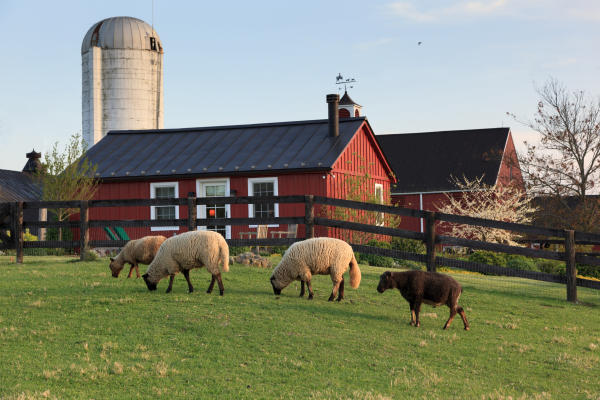 Goodstone farm
