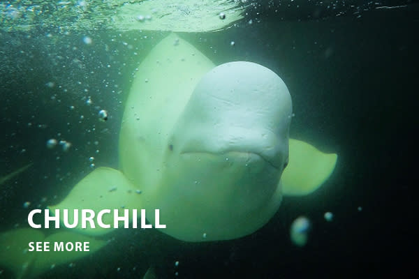 Churchill - Home is where the heart is