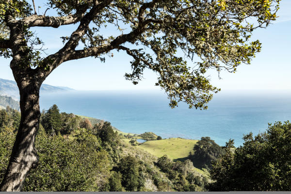 View of the ocean and trees from Nepenthe in Big Sur