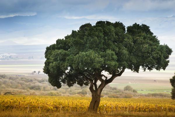 CV-Tree