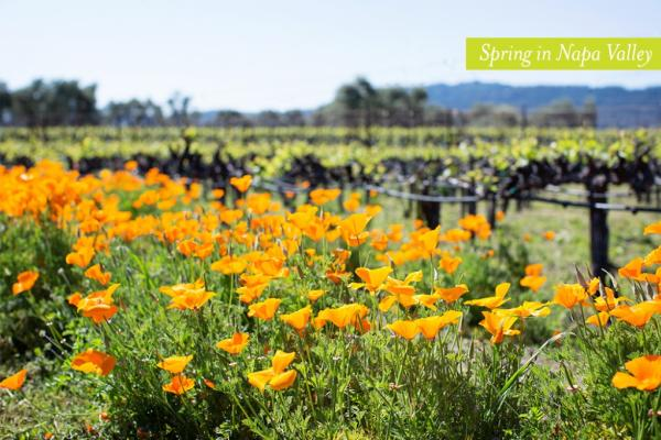 Visit Napa Valley in the Spring