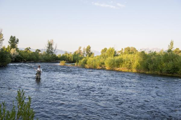 a single person Fly Fishing