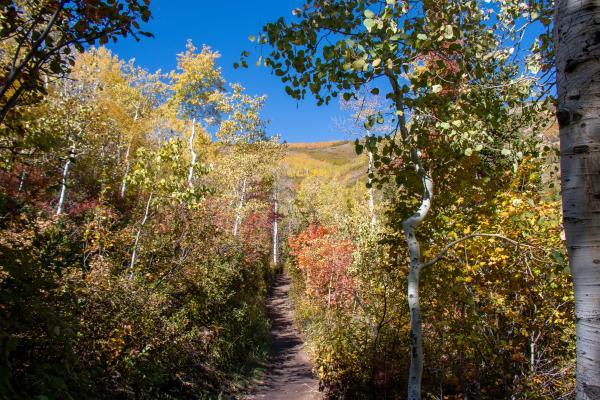 Fall Foliage on Rob's Trail