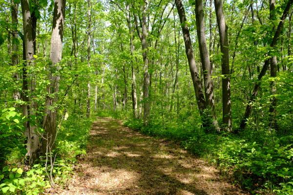 Woodland Hertiage Trail