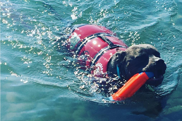 Rock Point Swimming dog