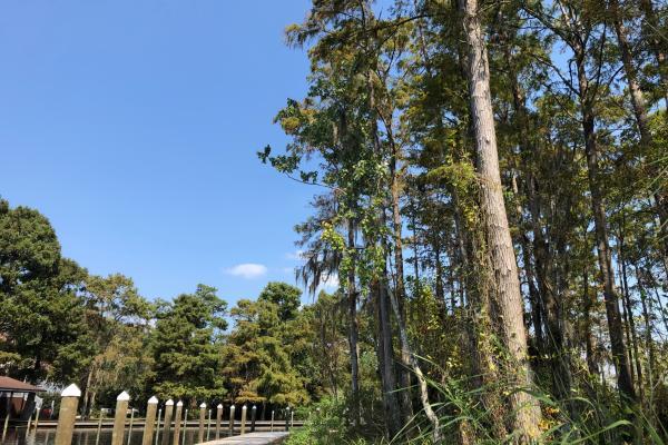The boardwalk at St. Tammany's Heritage and Bayou Bonfouca near Slidell