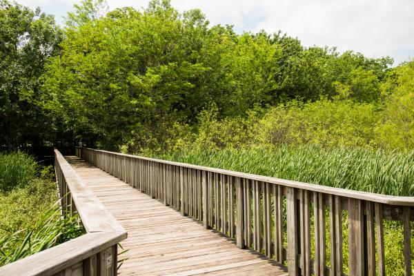 Boardwalk to the observation deck at Cullinan Park.