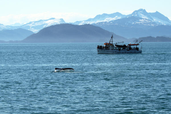 a whale tail near a boat with passengers in Prince William Sound