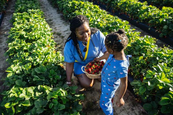 Strawberry Picking - Family