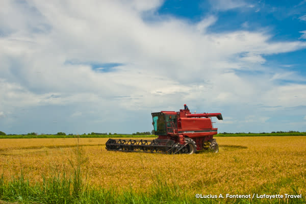 Farming equipment in a rice field in Louisiana