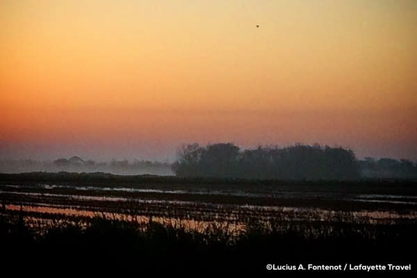 Sunset over a rice field in Louisiana
