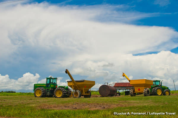 Farming equipment harvests rice in Louisiana