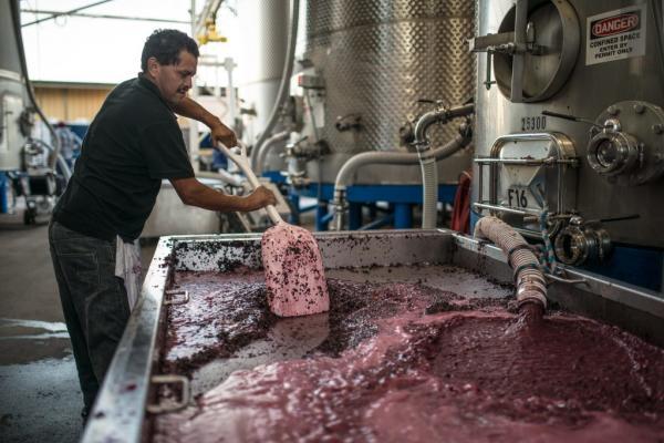 Fermentation - Napa Valley