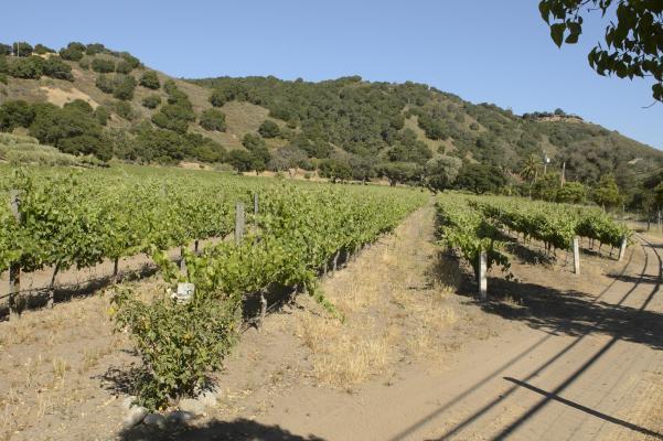 CV-Vineyards