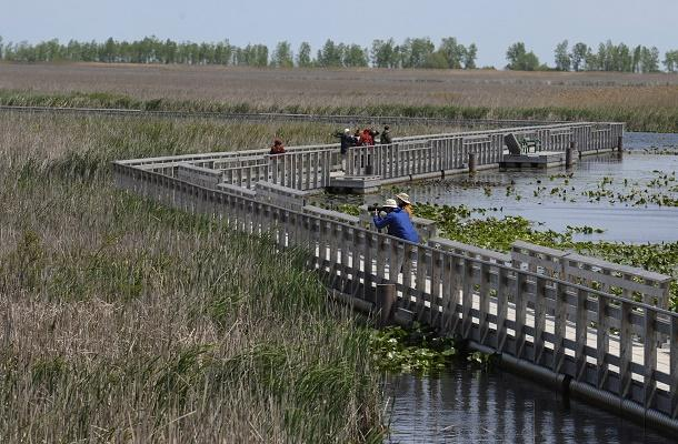 Boardwalk at Point Pelee Park