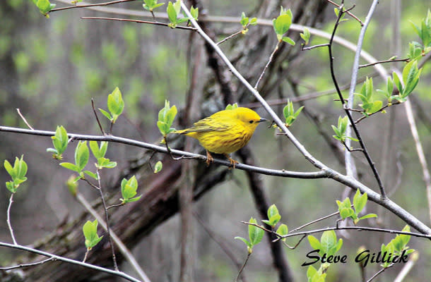 Spring slideshow blog 5