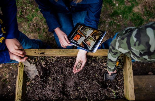 Virtual Blog: Gardening