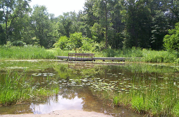 Ojibway Marsh