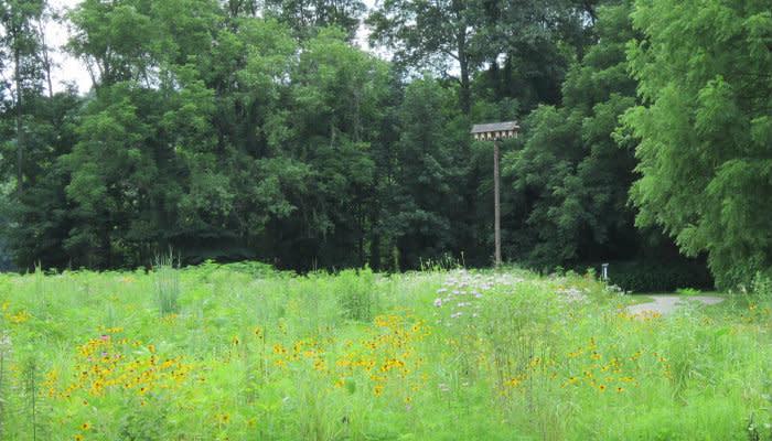 Burkhart Creek - Bat Boxes