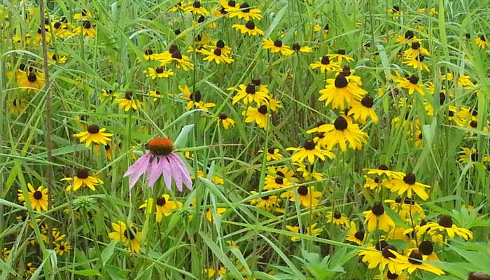 Burkhart Creek - Flowers
