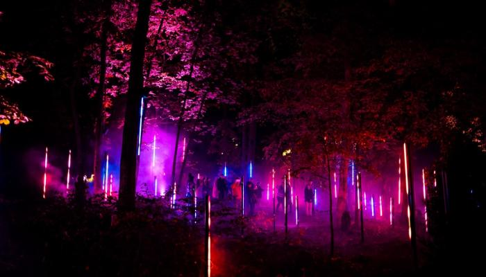 A night image of lights in trees