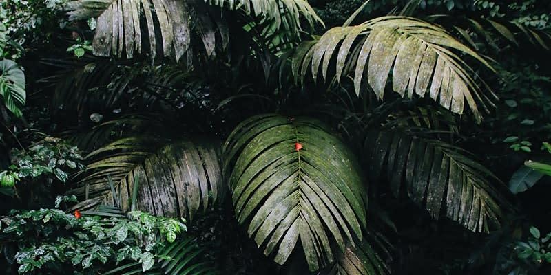 A Botanical Walk