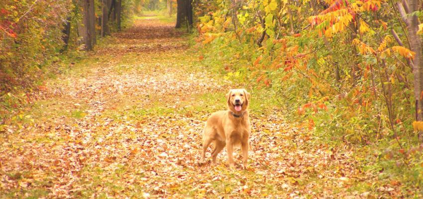 ontario-pathways-canandaigua-fall-dog-friendly