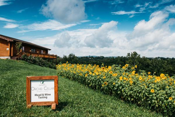 Sunflower field and exterior of the Orchid Cellar Winery & Meadery