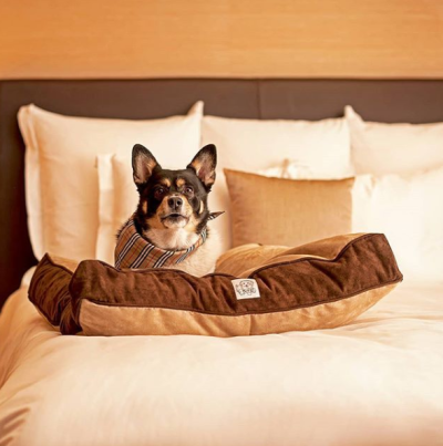 Dog relaxing on the hotel bed at Hyatt Place Sugar Land