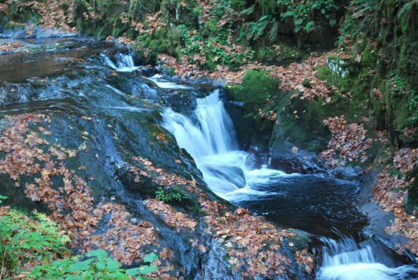 Sweet Creek by Emily Forsha