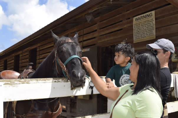 Horse - dsc0286.