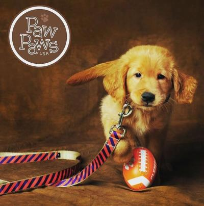 Professional dog portrait at Paw Paws USA. Go Tigers!