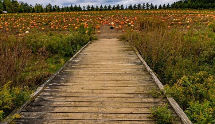 Bridge to Pumpkins