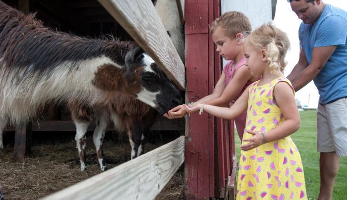 Children and llamas