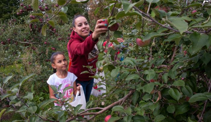 Picking Apples group