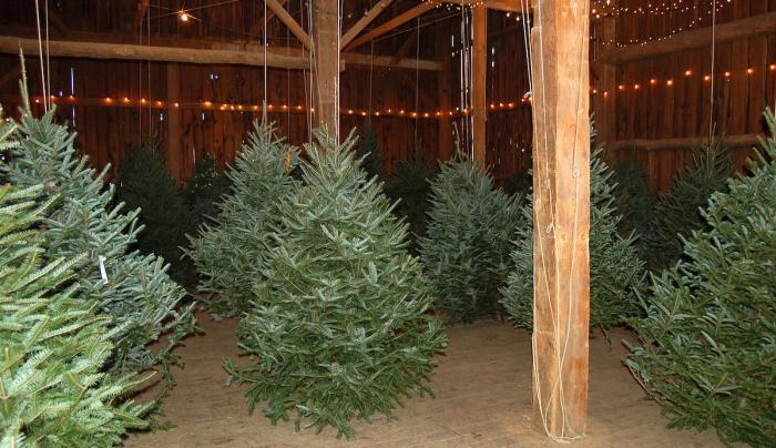 trees in barn