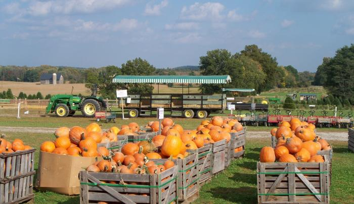 Look at all the Pumpkins!