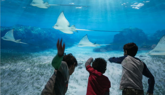 11. National Geographic Encounter: Ocean Odyssey