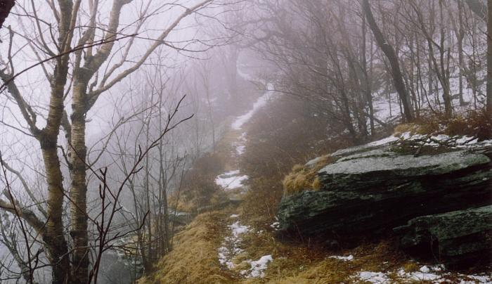 Dry Brook Ridge Trail in fog (C Olney).JPG