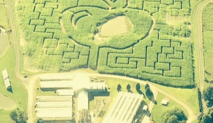 Samascott Corn Maze