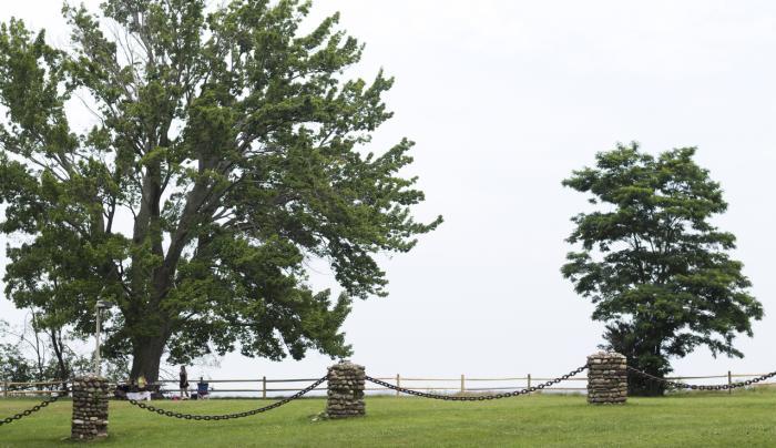 Trees Overlooking Lake Ontario