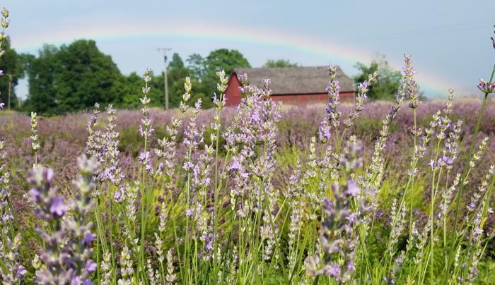 Rainbow over Lavenlair Farm