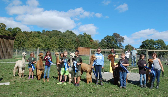 National Alpaca Day Festival