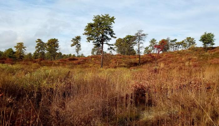 Albany Pine Bush landscape shot