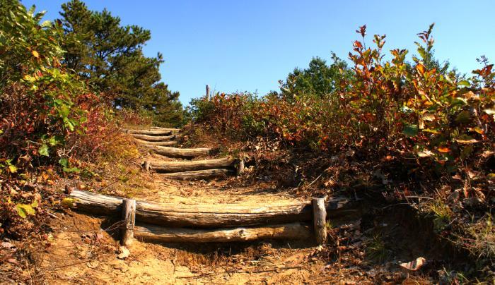 Pine Bushing Stairs
