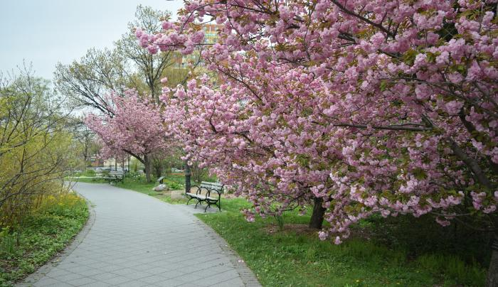Cherry Circle in Spring by Jess Brey