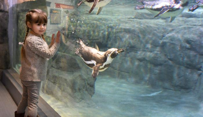 Aquarium of Niagara Image