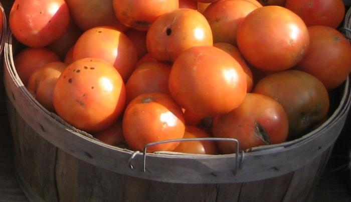 Biophilia Farm Market