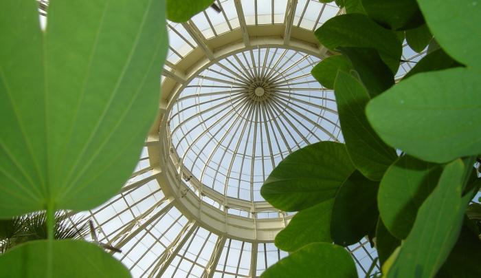 Botanical Gardens Dome - Photo Courtesy of  The Buffalo and Erie County Botanical Gardens